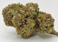 Medicinal-Marijuana