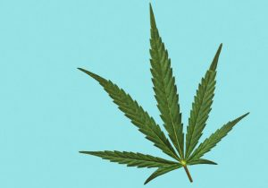 Everything We Must Know About The Hemp Plant!